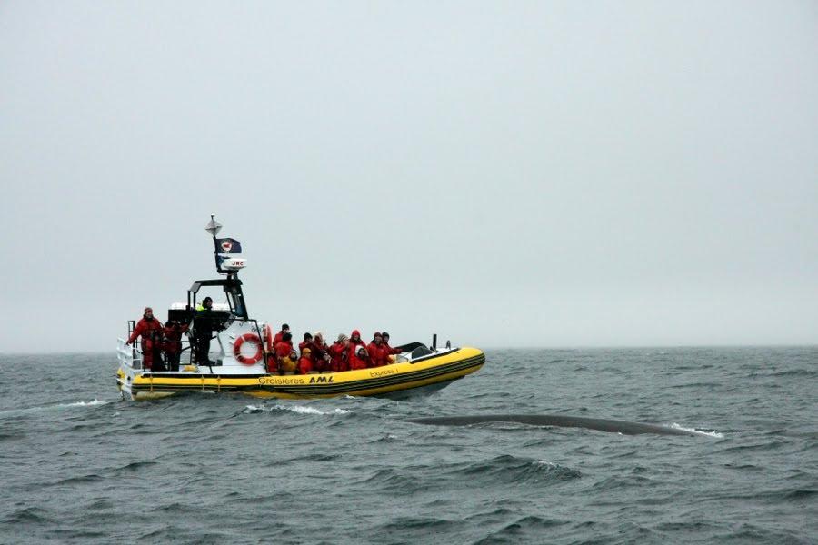 Walbeobachtung Quebec: Ein Whale Watching-Boot auf dem St Lorenz Strom bei Tadoussac