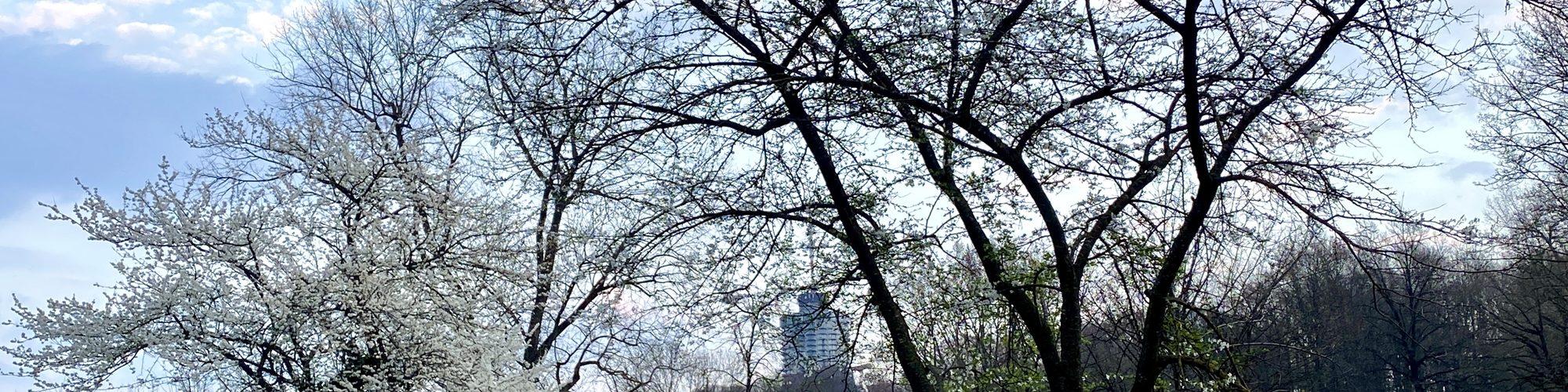 Symbolbild Reise Erinnerung: blühende Bäume im Frühjahr am Wertachkanal in Augsburg